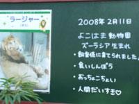 のんびり、一人でまわる動物園