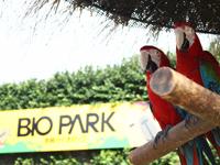 開放的な動物園