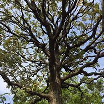樹木さんぽ